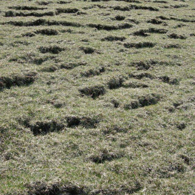 Happy soil day!